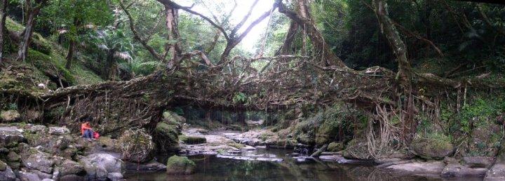Los puentes vivos de Meghalaya, La india