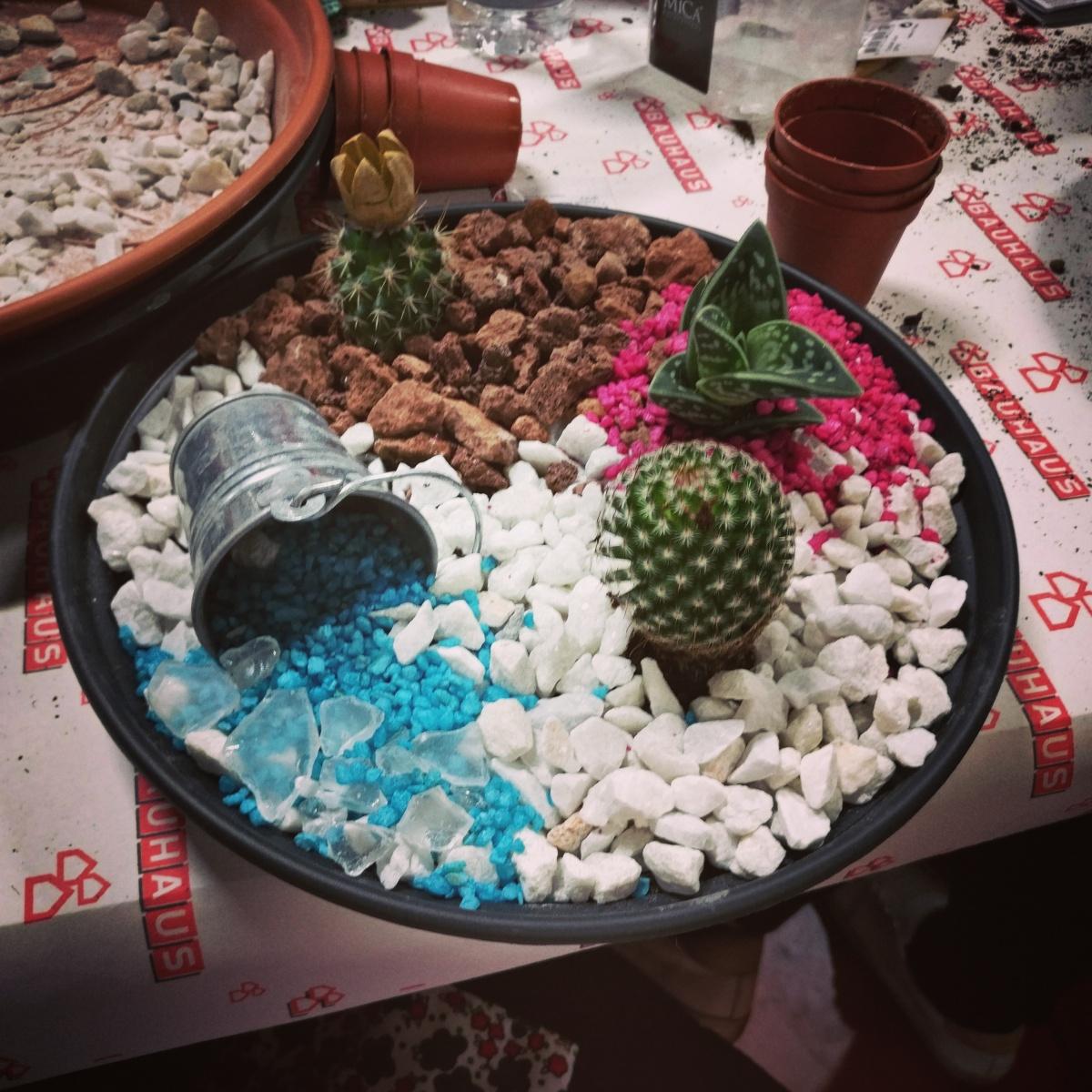 Jardín decorativo de Suculentas y Cactus